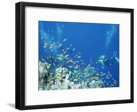 Divers Enjoy the Beauty of the Reefs and Marine Life in the Red Sea-Peter Carsten-Framed Art Print