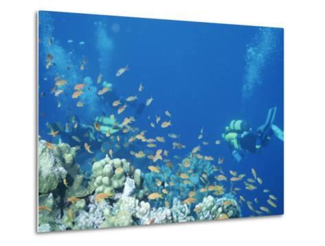 Divers Enjoy the Beauty of the Reefs and Marine Life in the Red Sea-Peter Carsten-Metal Print