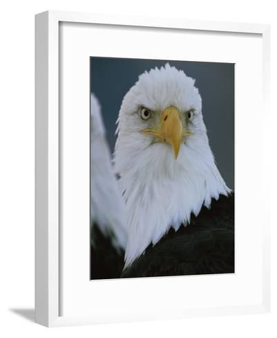 A Portrait of an American Bald Eagle-Klaus Nigge-Framed Art Print