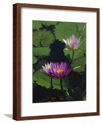 Fragrant Water Lily Flowers-Richard Nowitz-Framed Art Print