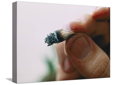 Extreme Close-up of a Marijuana Butt Held Between Two Fingers-Ira Block-Stretched Canvas Print