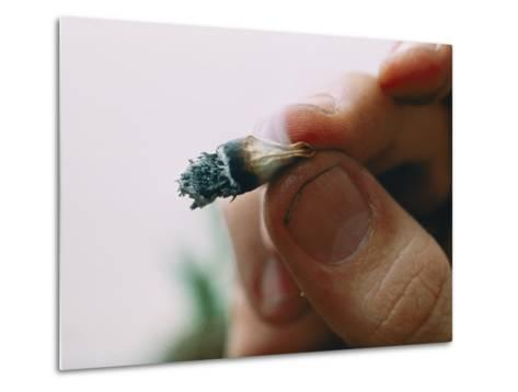 Extreme Close-up of a Marijuana Butt Held Between Two Fingers-Ira Block-Metal Print