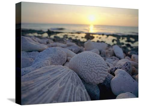 Close up of Shells and Pebbles on a Beach-Bill Curtsinger-Stretched Canvas Print