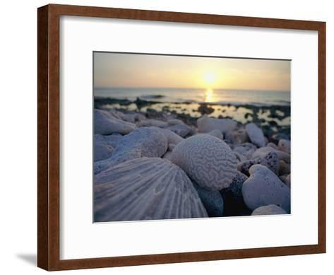 Close up of Shells and Pebbles on a Beach-Bill Curtsinger-Framed Art Print