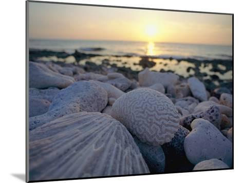 Close up of Shells and Pebbles on a Beach-Bill Curtsinger-Mounted Photographic Print