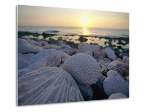 Close up of Shells and Pebbles on a Beach-Bill Curtsinger-Metal Print