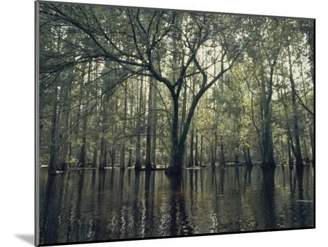 Trees Stick out of the Water-Bill Curtsinger-Mounted Photographic Print