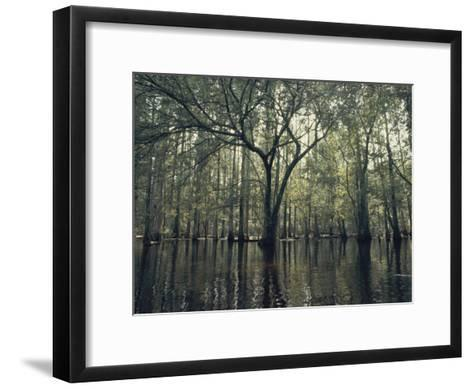 Trees Stick out of the Water-Bill Curtsinger-Framed Art Print