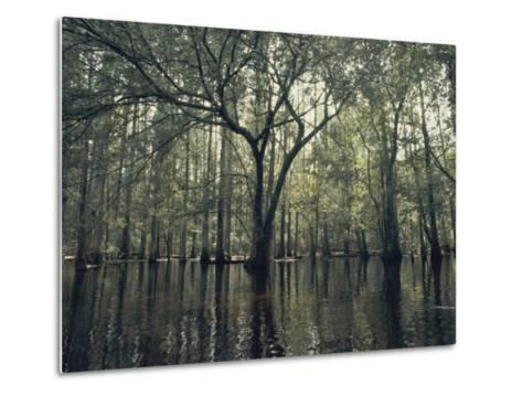 Trees Stick out of the Water-Bill Curtsinger-Metal Print
