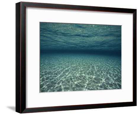 Underwater View-Bill Curtsinger-Framed Art Print