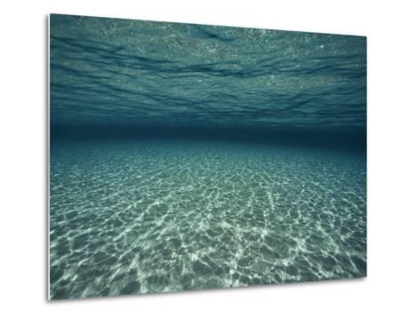 Underwater View-Bill Curtsinger-Metal Print