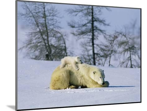 A Young Polar Bear Rests on the Back of its Mother-Norbert Rosing-Mounted Photographic Print