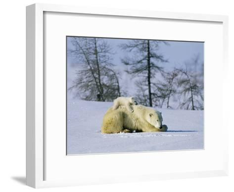 A Young Polar Bear Rests on the Back of its Mother-Norbert Rosing-Framed Art Print