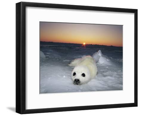 A Juvenile Gray Seal Pup Rests as the Sun Begins to Rise over the Snowy Landscape-Norbert Rosing-Framed Art Print