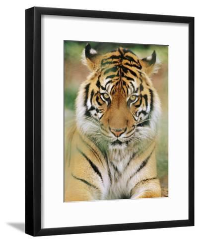 A Portrait of a Sumatran Tiger-Norbert Rosing-Framed Art Print