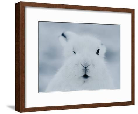 Close View of the Face of an Arctic Hare in Winter-Norbert Rosing-Framed Art Print