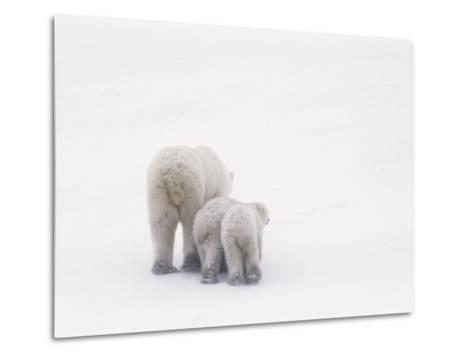 Rear View of a Polar Bear and Her Two Cubs-Norbert Rosing-Metal Print
