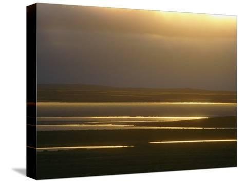 Marsh Ponds at Twilight-Norbert Rosing-Stretched Canvas Print