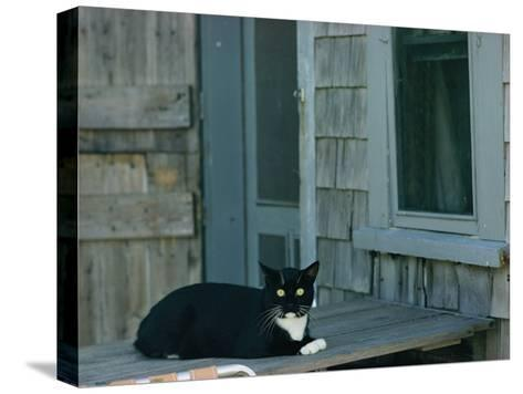 A Cat Sits on a Porch-James L^ Stanfield-Stretched Canvas Print