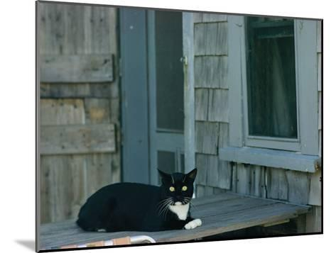 A Cat Sits on a Porch-James L^ Stanfield-Mounted Photographic Print