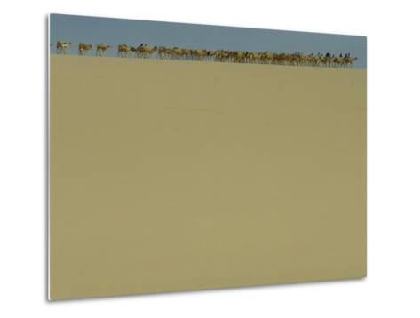 Salt Caravan Enroute to Agadez and Nigeria-James L^ Stanfield-Metal Print
