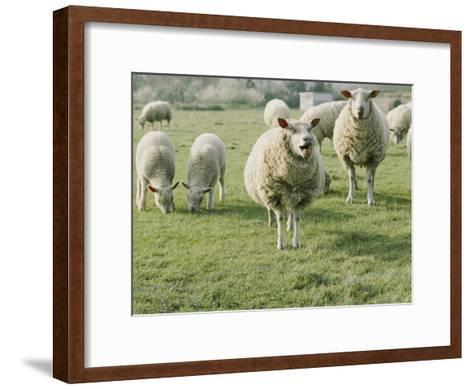 Sheep in a Field in Brittany-Nicole Duplaix-Framed Art Print