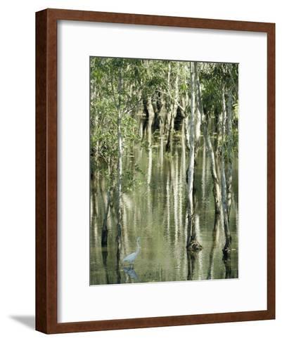 A Great Egret Wading Through a Swamp-Jason Edwards-Framed Art Print