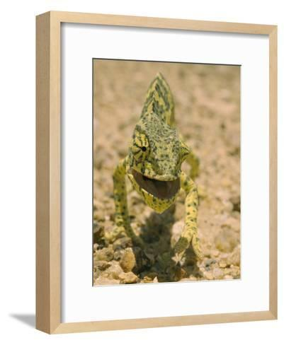 Close View of a Flap-Necked Chameleon-Jason Edwards-Framed Art Print