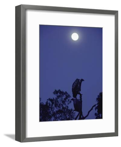 A Vulture Sits on a Branch under the Light of a Full Moon-Jason Edwards-Framed Art Print
