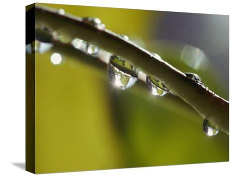 A Close-up of Water Droplets on a Blade of Grass-Todd Gipstein-Stretched Canvas Print