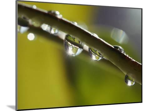 A Close-up of Water Droplets on a Blade of Grass-Todd Gipstein-Mounted Photographic Print