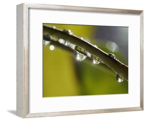 A Close-up of Water Droplets on a Blade of Grass-Todd Gipstein-Framed Art Print