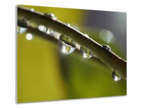 A Close-up of Water Droplets on a Blade of Grass-Todd Gipstein-Metal Print