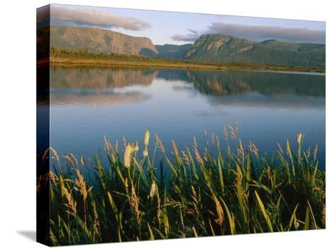 Grasses Grow Along the Edge of a Lake-Michael S^ Lewis-Stretched Canvas Print