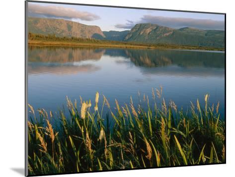 Grasses Grow Along the Edge of a Lake-Michael S^ Lewis-Mounted Photographic Print