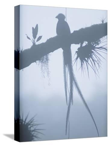 A Male Resplendent Quetzal is Silhouetted on Tree Branch Festooned with Air Plants-Steve Winter-Stretched Canvas Print