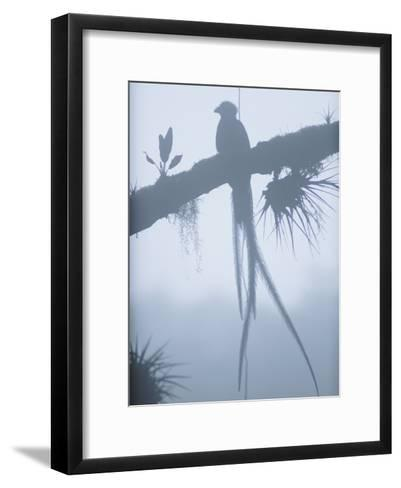 A Male Resplendent Quetzal is Silhouetted on Tree Branch Festooned with Air Plants-Steve Winter-Framed Art Print