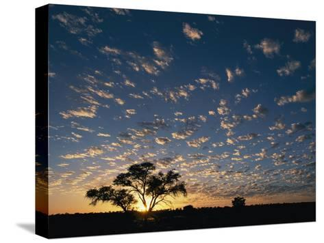 A Twilight View of a Lone Tree Silhouetted by the Setting Sun-Nicole Duplaix-Stretched Canvas Print