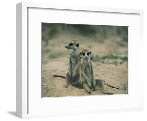 Meerkats Pose for the Camera-Nicole Duplaix-Framed Art Print