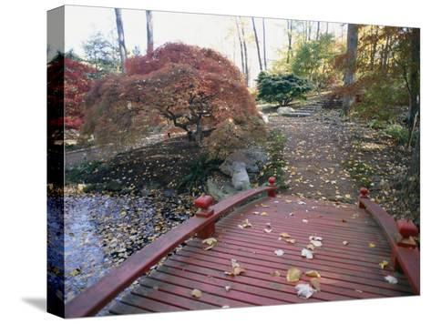 Japanese Maple Trees Exhibit Fall Color Changes in a Japanese Garden-Darlyne A^ Murawski-Stretched Canvas Print