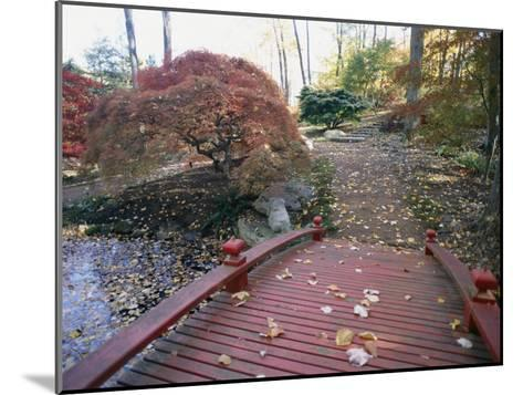 Japanese Maple Trees Exhibit Fall Color Changes in a Japanese Garden-Darlyne A^ Murawski-Mounted Photographic Print
