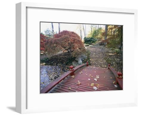 Japanese Maple Trees Exhibit Fall Color Changes in a Japanese Garden-Darlyne A^ Murawski-Framed Art Print