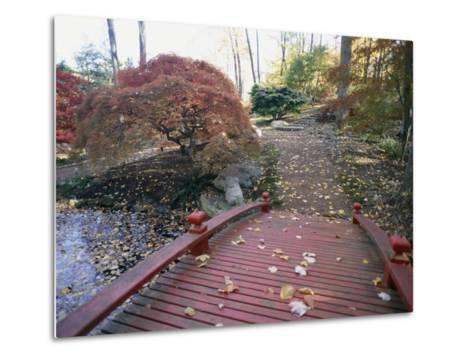 Japanese Maple Trees Exhibit Fall Color Changes in a Japanese Garden-Darlyne A^ Murawski-Metal Print