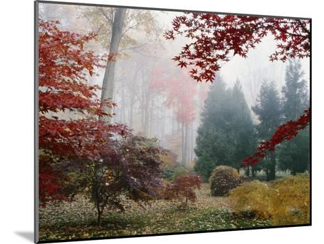 Several Japanese Maple Trees in the Fall-Darlyne A^ Murawski-Mounted Photographic Print