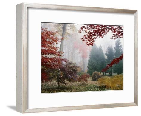 Several Japanese Maple Trees in the Fall-Darlyne A^ Murawski-Framed Art Print