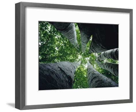 View Looking up the Trunk of a Sycamore Tree-Paul Zahl-Framed Art Print