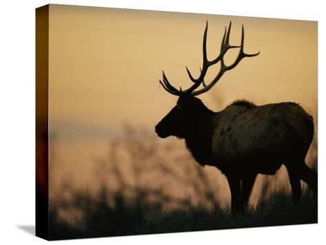 A Caribou is Silhouetted against a Cloudy Twilight Sky-Joel Sartore-Stretched Canvas Print