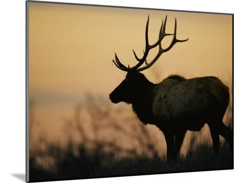 A Caribou is Silhouetted against a Cloudy Twilight Sky-Joel Sartore-Mounted Photographic Print