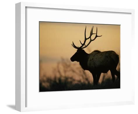 A Caribou is Silhouetted against a Cloudy Twilight Sky-Joel Sartore-Framed Art Print