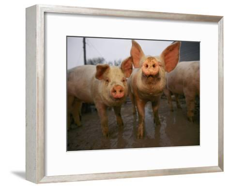 Having Faces Only a Mother Could Love-Joel Sartore-Framed Art Print
